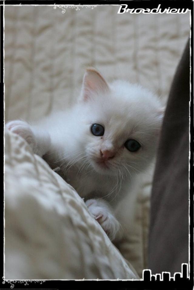 Les bébés de Foxy et Pepper 2012_07_15_jack-3665ccb